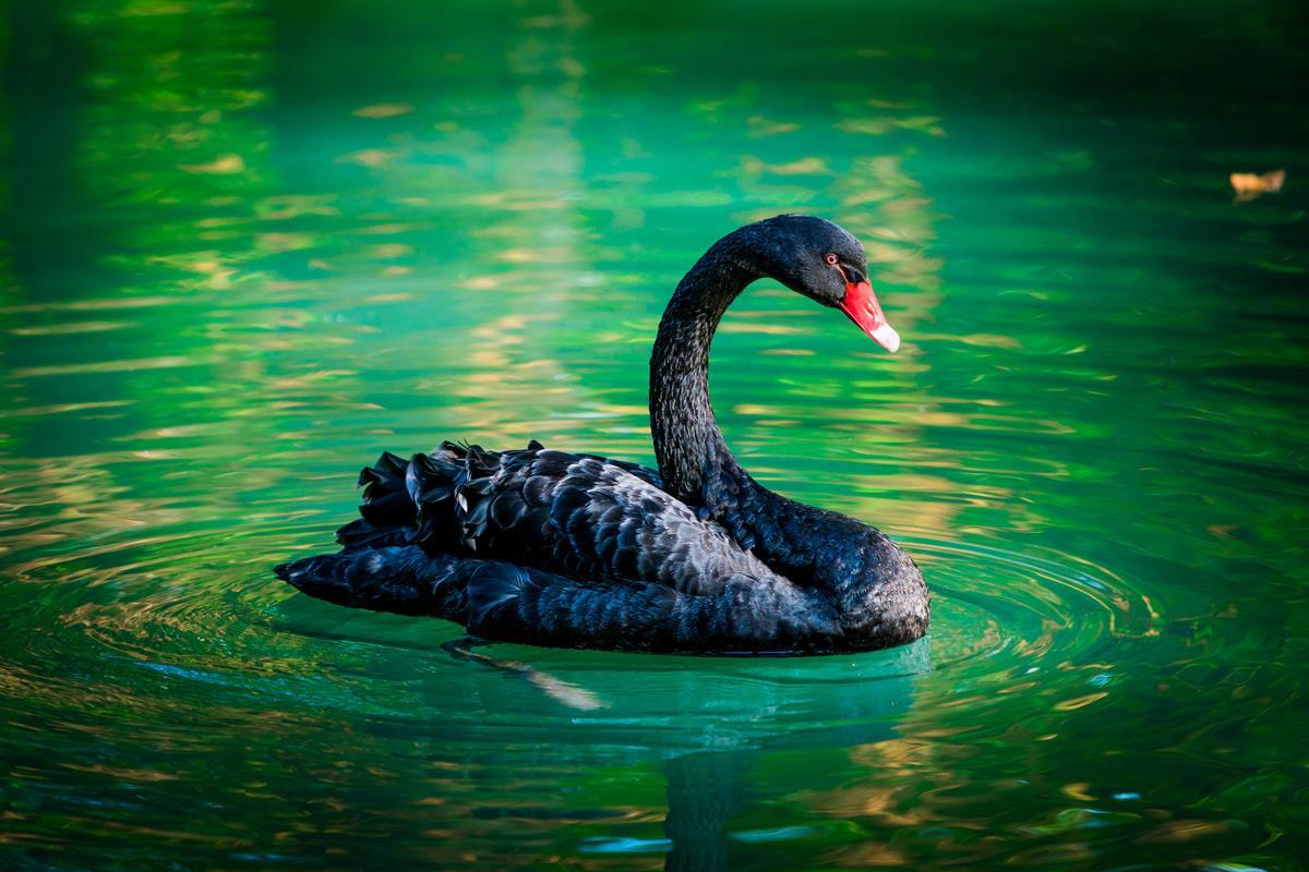 L'architecte financier, atout incontournable en période de « black swan »